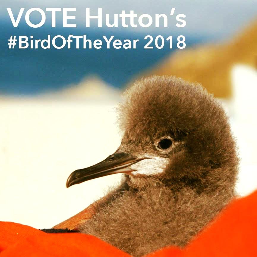 Bird of the year 2018