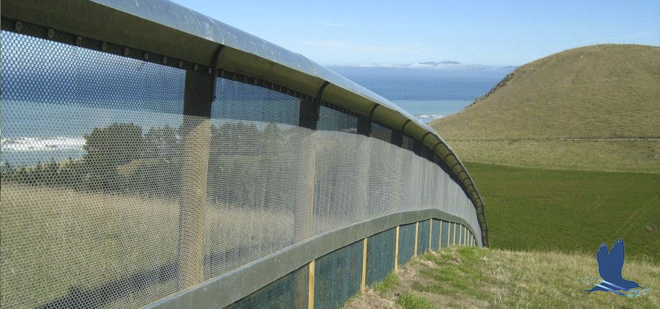 Kaikoura Pensinula fence Hutton's shearwater New Zealand